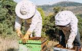 بزرگترین واحد فرآوری موم زنبور عسل در کاشمر راه اندازی شد